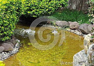 Relaxed bird in stream