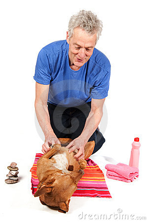 Relaxing dog becoming Spa treatment