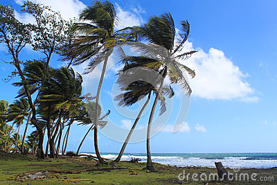 Beach and palm trees, Dominica, Caribbean Islands
