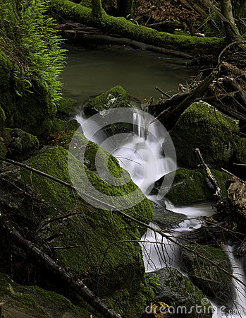 Rugged Remote Forest Waterfall