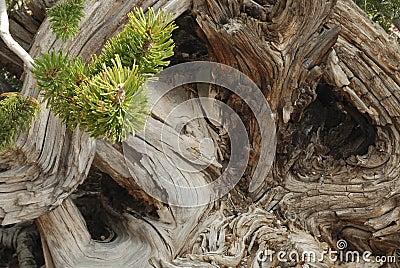 Remous d arbre