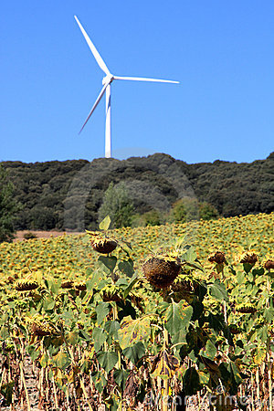Renewable energy production like bio and wind