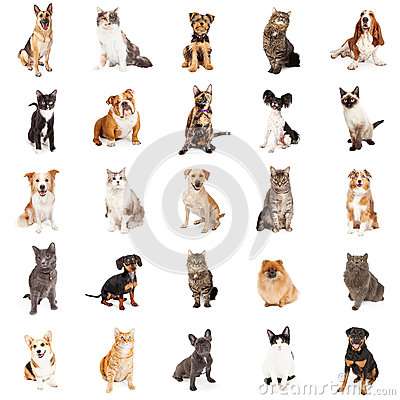 Free Repeating Pattern Of Cats And Dogs Royalty Free Stock Image - 72268306