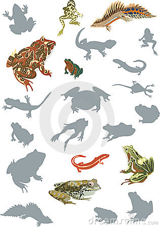 Reptile and amphibian collection