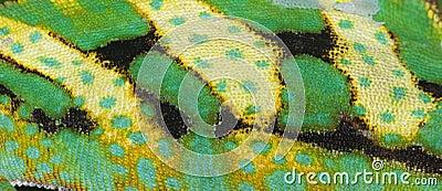 Reptile animal chameleon skin