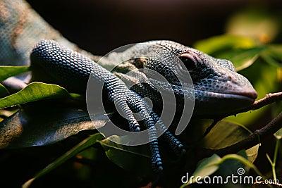 Reptile in San Diego Zoo