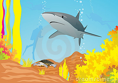 Requin et plongeurs