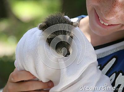 Rescued Raccoon Baby