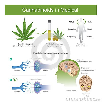 Free Research Has Found That Cannabis Indica Plant Can Have The Follo Royalty Free Stock Photo - 109270385