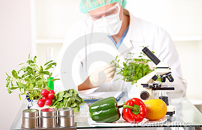 Researcher with GMO plants  in the laboratory