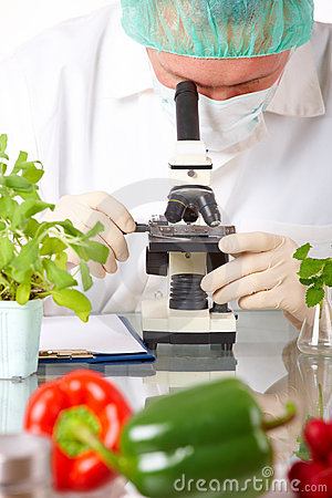 Researcher with GMO vegetable