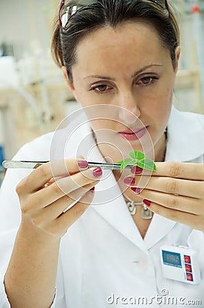 Researcher holds leaf