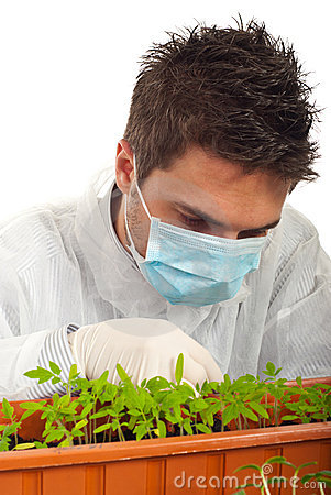 Researcher man examine new plants