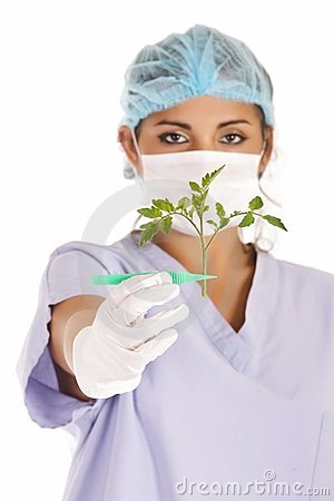 Researcher showing tomato stem