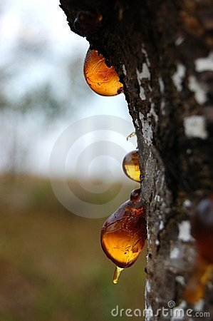 Free Resin Drops / Amber Royalty Free Stock Image - 11289406