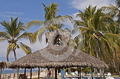 Resort palapa with palm trees