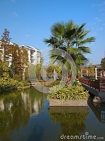 Resort,Palm Tree
