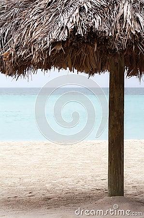 Resort Palm Tree on the Beach