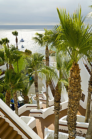 Resort palm trees and stairs