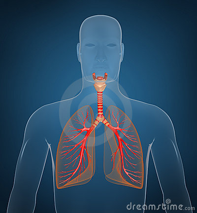 Respiratory system on blue background
