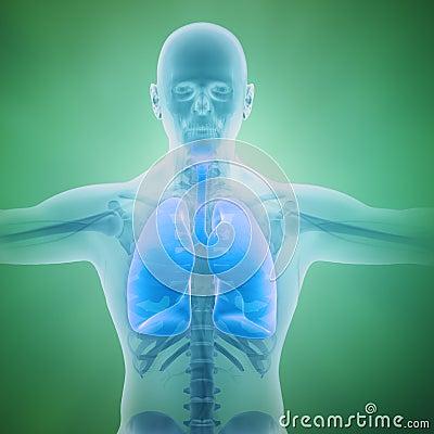 Respiratory system scientific