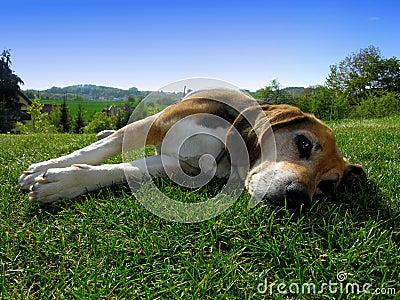 Rest dog