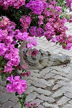 Resting Crocodile