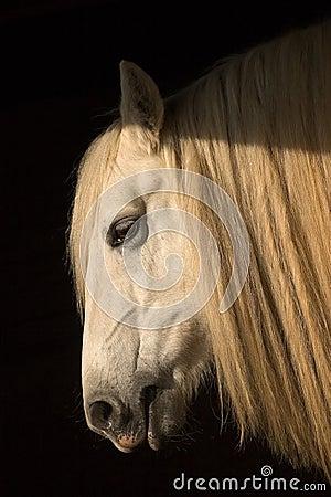 Resting horse