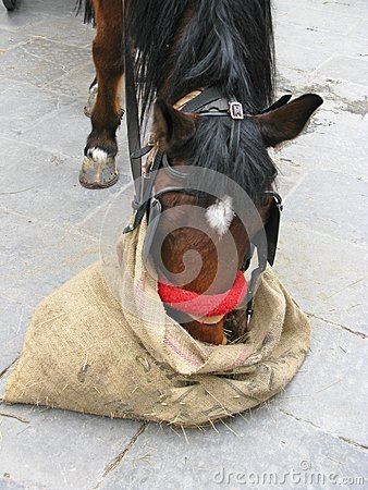 A resting horse in the city