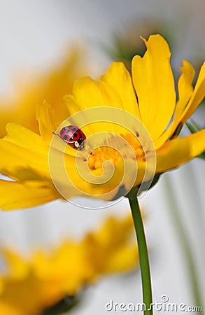 Resting ladybug on flower