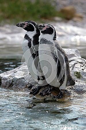 Resting Penguins