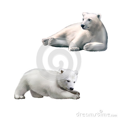 Free Resting Polar Bear. King Penguin Under The Water Royalty Free Stock Images - 51248769