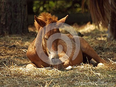 Resting Pony Free Public Domain Cc0 Image