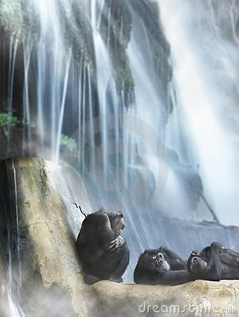 Free Resting Primates And Waterfall Royalty Free Stock Image - 23736906