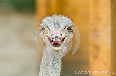 Retrato da avestruz