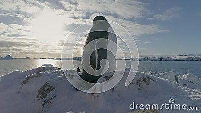 Retrato de acercamiento al pingüino de Gentoo Antártico El pájaro se sienta en el nido y lo protege metrajes