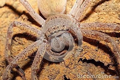 Retrato de la araña