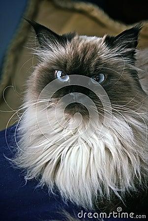 Retrato del gato