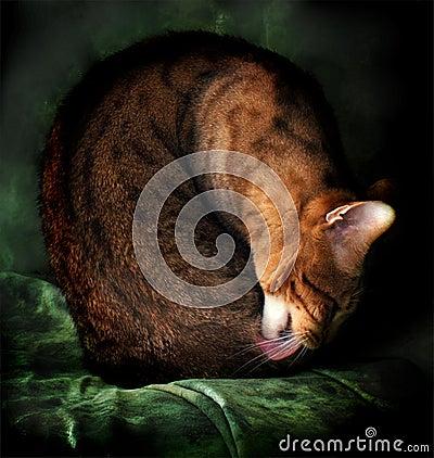 Retrato del gato de Bengala de la bella arte