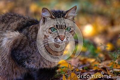 Retrato del gato de Tabby en otoño