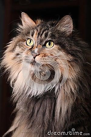 Retrato do gato.