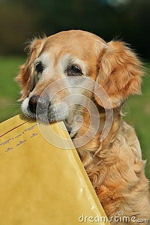 Retriever assistant of mailman