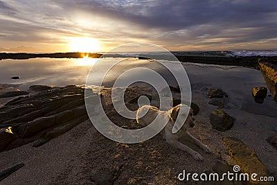 Retriever on the beach at sunrise