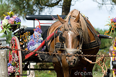 Retro cart with horse and flowers