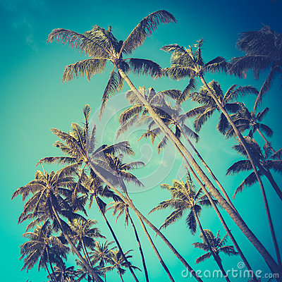 Free Retro Diagonal Palm Trees In Hawaii Stock Image - 45383251