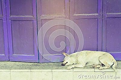 Retro folding purple door Stock Photo