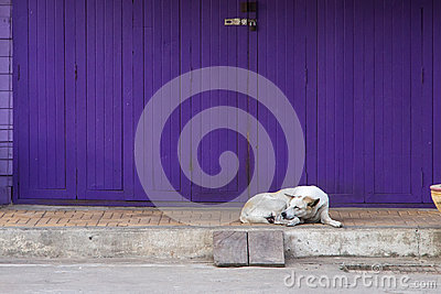 retro folding purple door with sleepy dog in vintage style Stock Photo