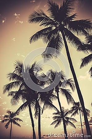 Free Retro Sepia Palm Trees Royalty Free Stock Photos - 53779008