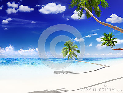 Retro Tropical Beautiful Beach with Palm Tree