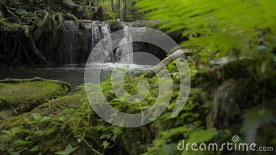 Reveal of freshness small waterfall flowing into the natural pond among lush foliage plants in tropical rain forest. stock footage